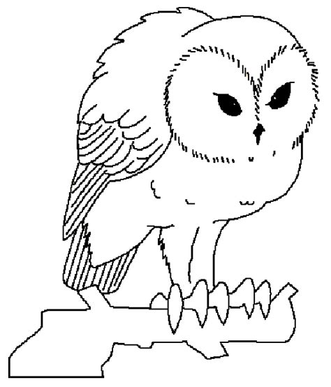 screech owl coloring page animals coloring pages of owls print animals best free