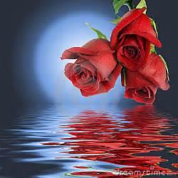 imagenes de rosas sobre agua sosateteinforma 04 may 2011