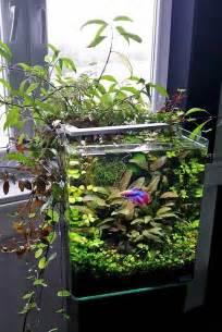nano aquascapes nano aquascapes aquascaping aquarium