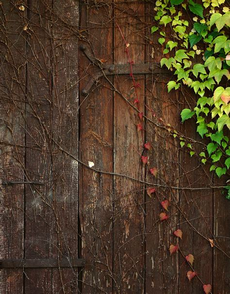 children photography background wood green leaves photo