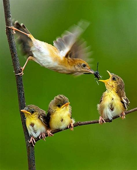 baby birds feeding aves aves aves pinterest the