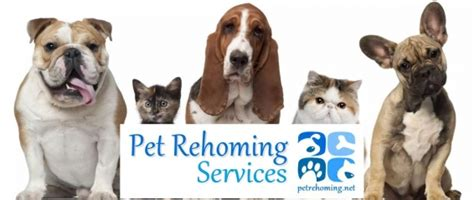 pet rehoming network rehome a or cat usa and canada