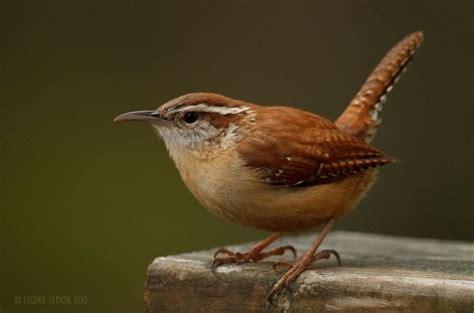 pin by lois pereira on animals birds pinterest