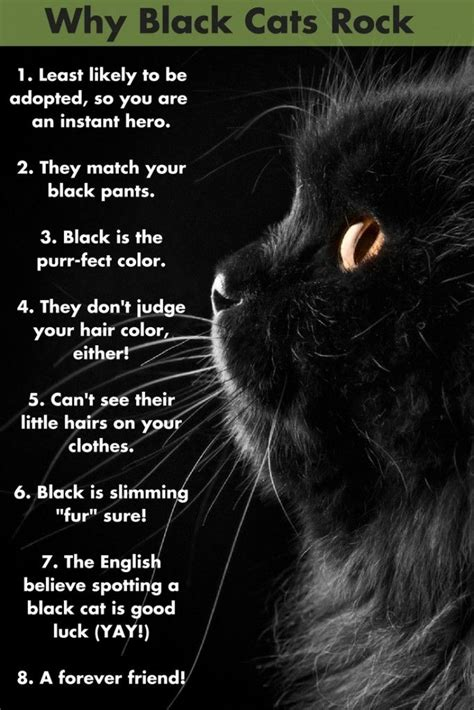 how to find a black cat in a room the psychology of intuition influence decision and trust books 25 best black cat quotes on happy