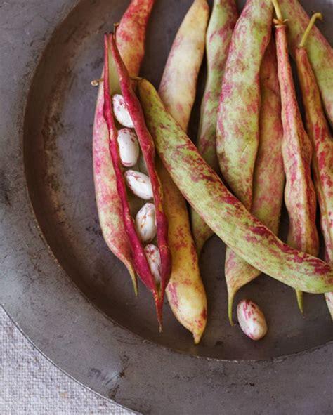Kacang Jogo Merah 17 best images about vegetables on syzygium