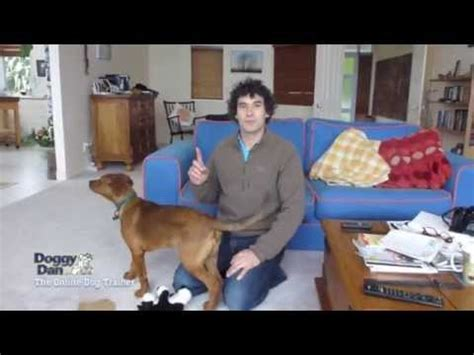 how to your puppy not to bark barking funnydog tv
