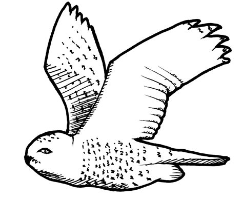 printable snowy owl coloring pages cartoon snowy owl cliparts co