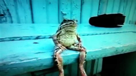 Sitting Frog Meme - frog sitting on bench like a human youtube
