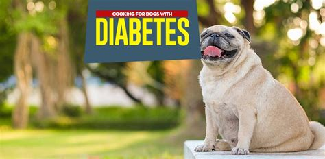 what not to feed dogs diabetic diet what to feed a diabetic and what not to feed