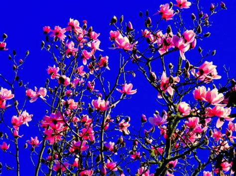 spring start poll does spring start on sept 1 or the spring equinox weatherwatch co nz