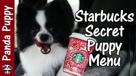 starbucks for dogs starbucks secret menu for dogs puppuccino panda puppy au naturale vlogmas day 15