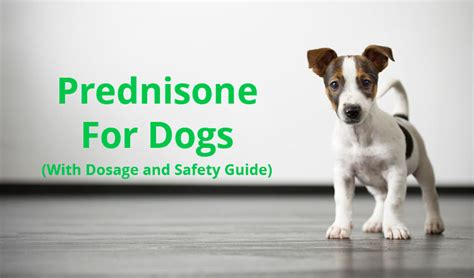 prednisone side effects for dogs prednisone for dogs with dosage and safety guide