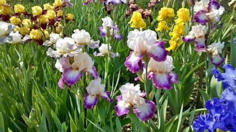 immagini di fiori rari l insolito giardino piante e fiori rari e speciali