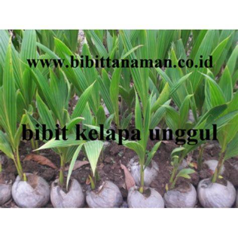 Alamat Penjual Bibit Kelapa Kopyor jual bibit tanaman unggul murah di purworejo