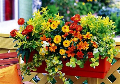 fiori da davanzale i fiori e i cinque sensi in biblioteca civica g bedeschi
