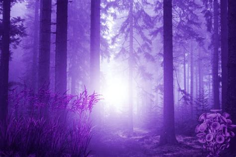 fantasy forest  stock photo public domain pictures