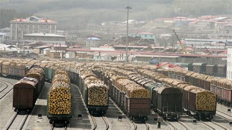 in russian in russia s vast far east timber thieves thrive ncpr news