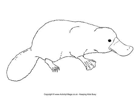 easy baby platypus coloring pages