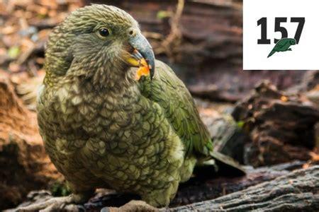 Pohon Masalah Kehamilan Remaja Lacoste Ganti Logo Buaya Dengan 10 Spesis Haiwan Terancam