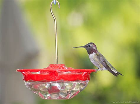 can you use bleach to clean hummingbird feeders wiring
