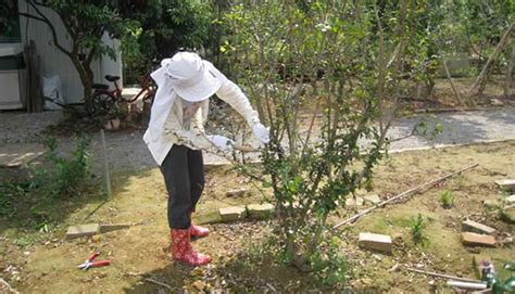 Gardening While How To Protect Your Skin While Gardening