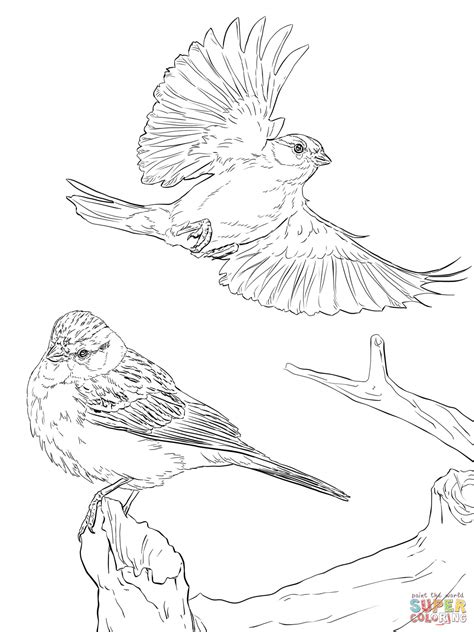 Two Chipping Sparrows Coloring Page Free Printable Sparrow Coloring Pages