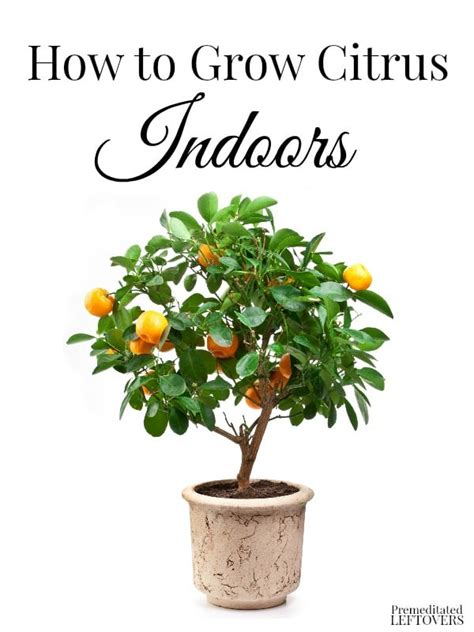 hardest plants to grow hardest plants to grow how to grow citrus indoors