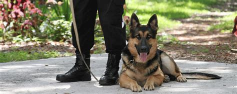 how to security dogs nasdu national association of security users