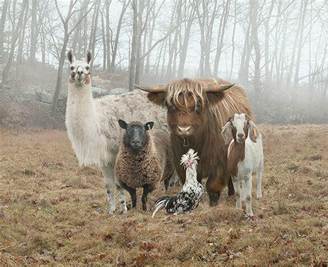 animal farm photography   havent