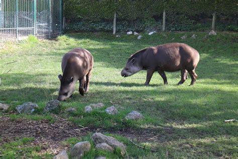 lake district wildlife park visit cumbria
