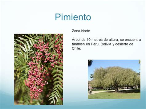 imagenes de flores de la zona norte objetivo reconocer e identificar variadas plantas de