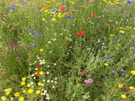 mixed perennial and wildflower meadow planting grow like grandad