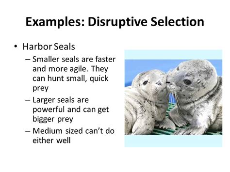 exle of selection evidence for evolution ppt