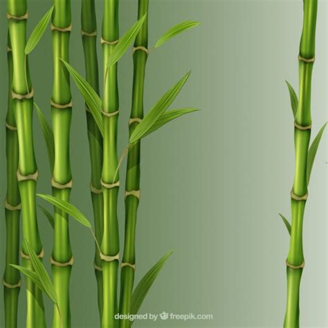 imagenes zen bambu canas de bambu baixar vetores gr 225 tis