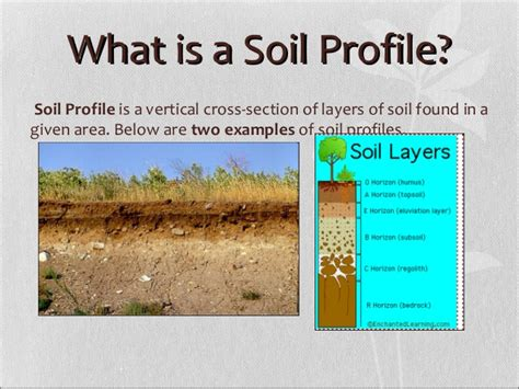 what is section 4 soil profile