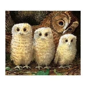 Greeting cards 187 the illustrators 187 owl babies 187 owl babies