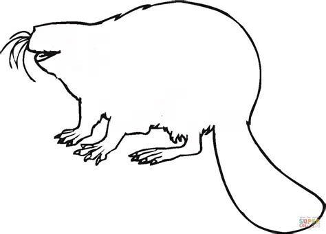 beaver color beaver coloring pages grig3 org