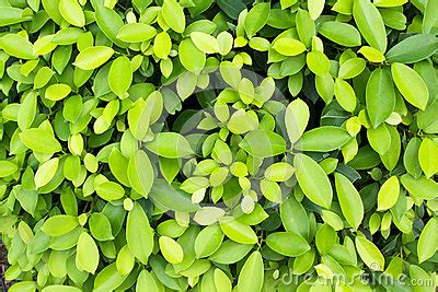 growth pattern in nature the green leaf background stock photo image 46236721