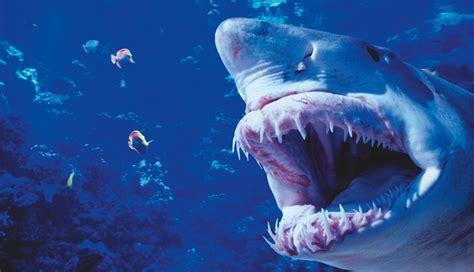 peligro en el mar 8467502584 peligro 161 tibur 243 n supervivencia revista oxigeno