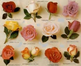 romantic flowers types of roses
