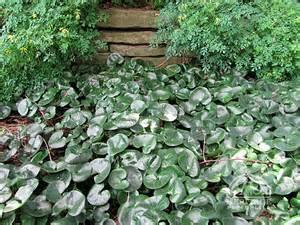 Plants perennials http www perennials com content top 10 perennials
