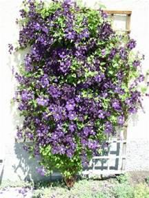 some tips for diy vertical gardens architecture decorating ideas