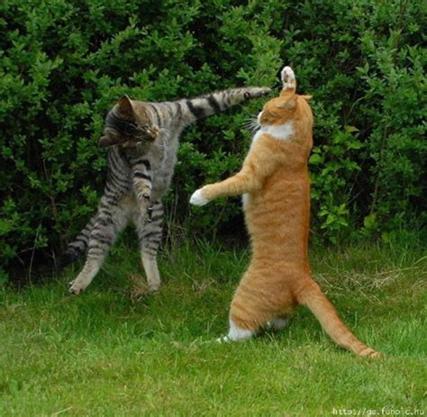funny animal pictures daily amazing fun funny pictures of animals
