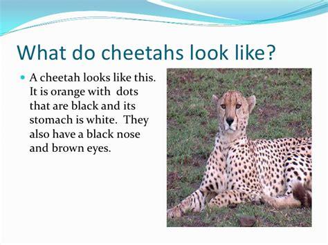 Look Like A by Cheetahs