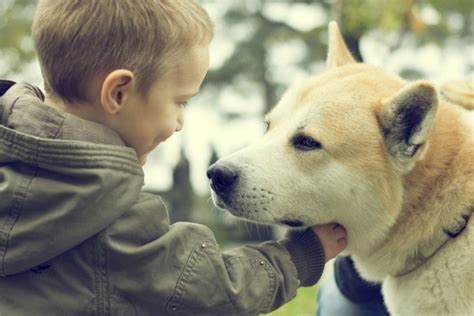 dogs  children  autism american kennel club