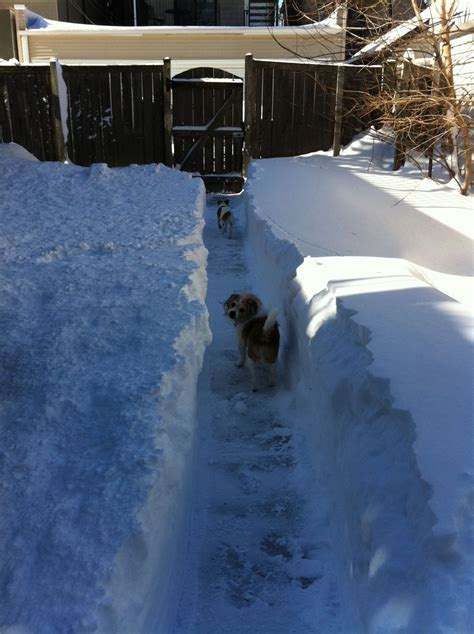 potty puppy in winter how to potty a puppy in winter breeds picture