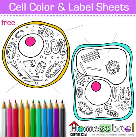 anatomy coloring book ce credits free cell coloring page animal plant cell color and
