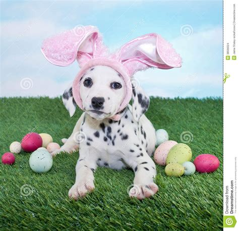 easter puppy easter puppy stock photo image of humor dalmatian animals 38566024