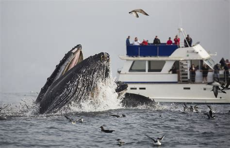 monterey whale watching boats california whale watching tips to see them when to go