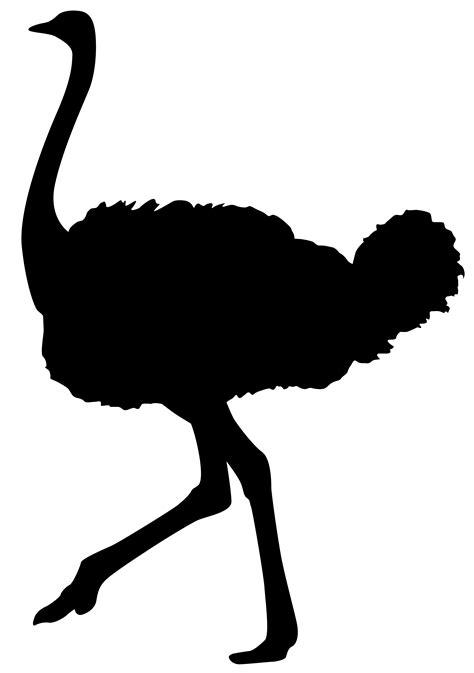 ostrich clipart ostrich clipart clipart best